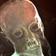 Cristo de la Paciencia radiografia copia